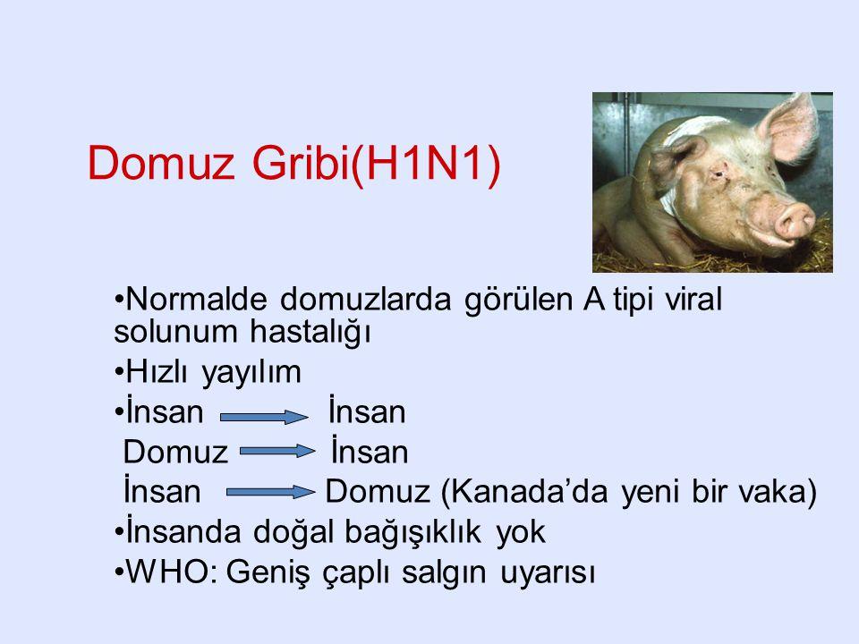 Domuz Gribi(H1N1) Normalde domuzlarda görülen A tipi viral solunum hastalığı. Hızlı yayılım. İnsan İnsan.