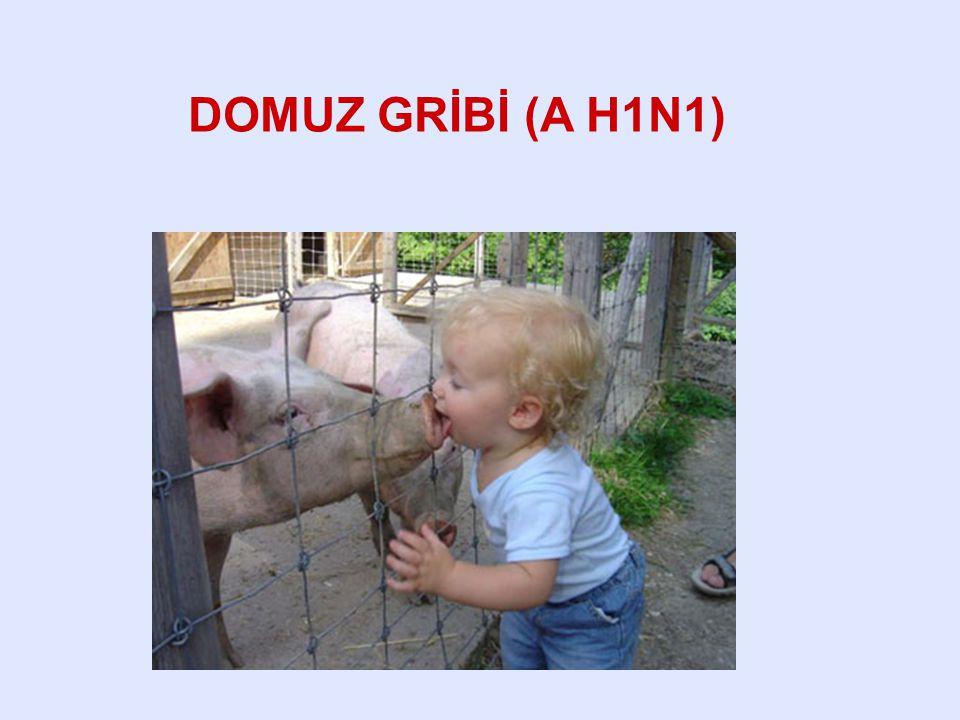 DOMUZ GRİBİ (A H1N1)