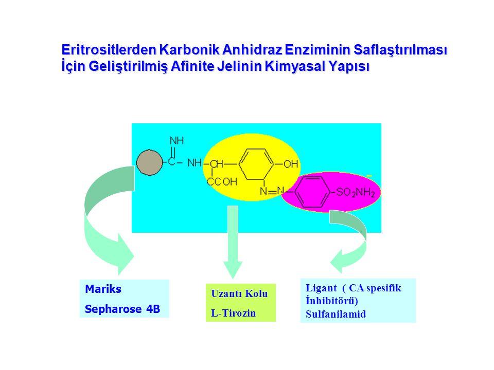 Eritrositlerden Karbonik Anhidraz Enziminin Saflaştırılması İçin Geliştirilmiş Afinite Jelinin Kimyasal Yapısı