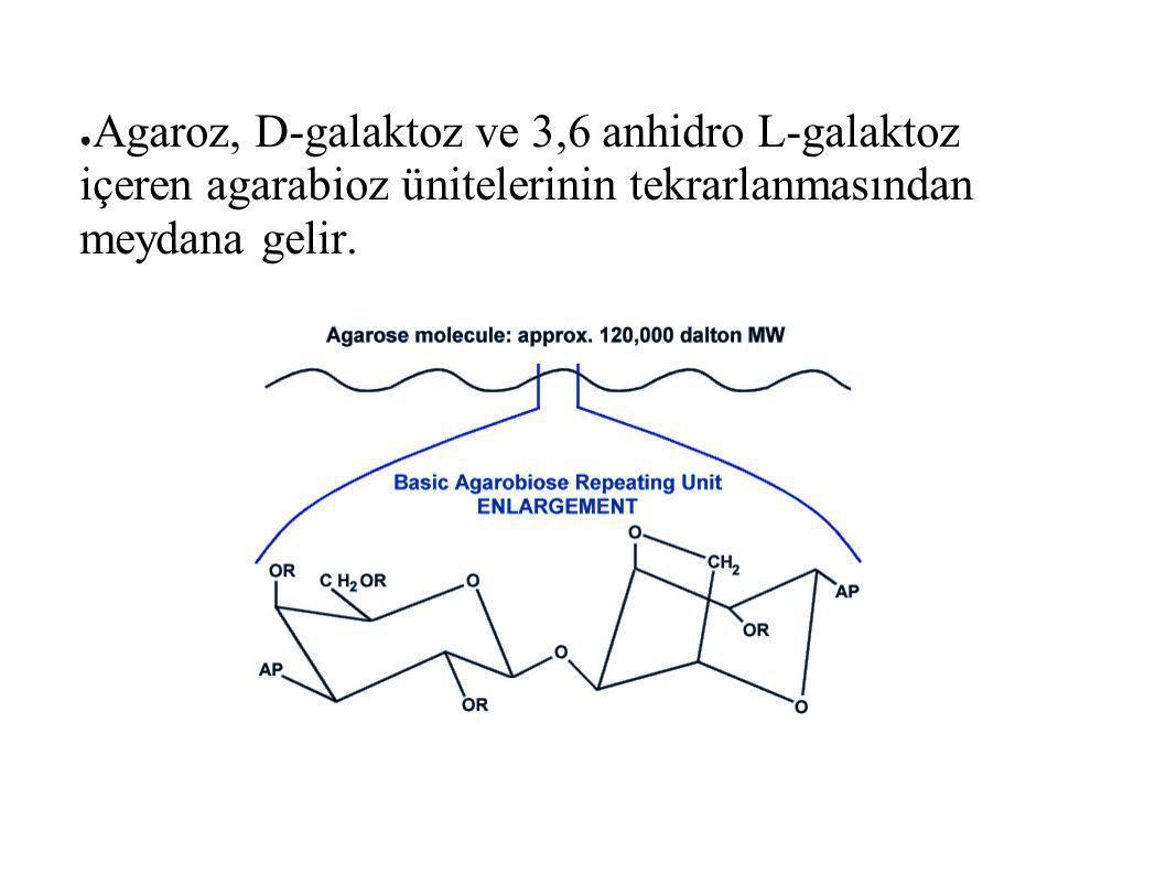 Agaroz, D-galaktoz ve 3,6 anhidro L-galaktoz içeren agarabioz ünitelerinin tekrarlanmasından meydana gelir.