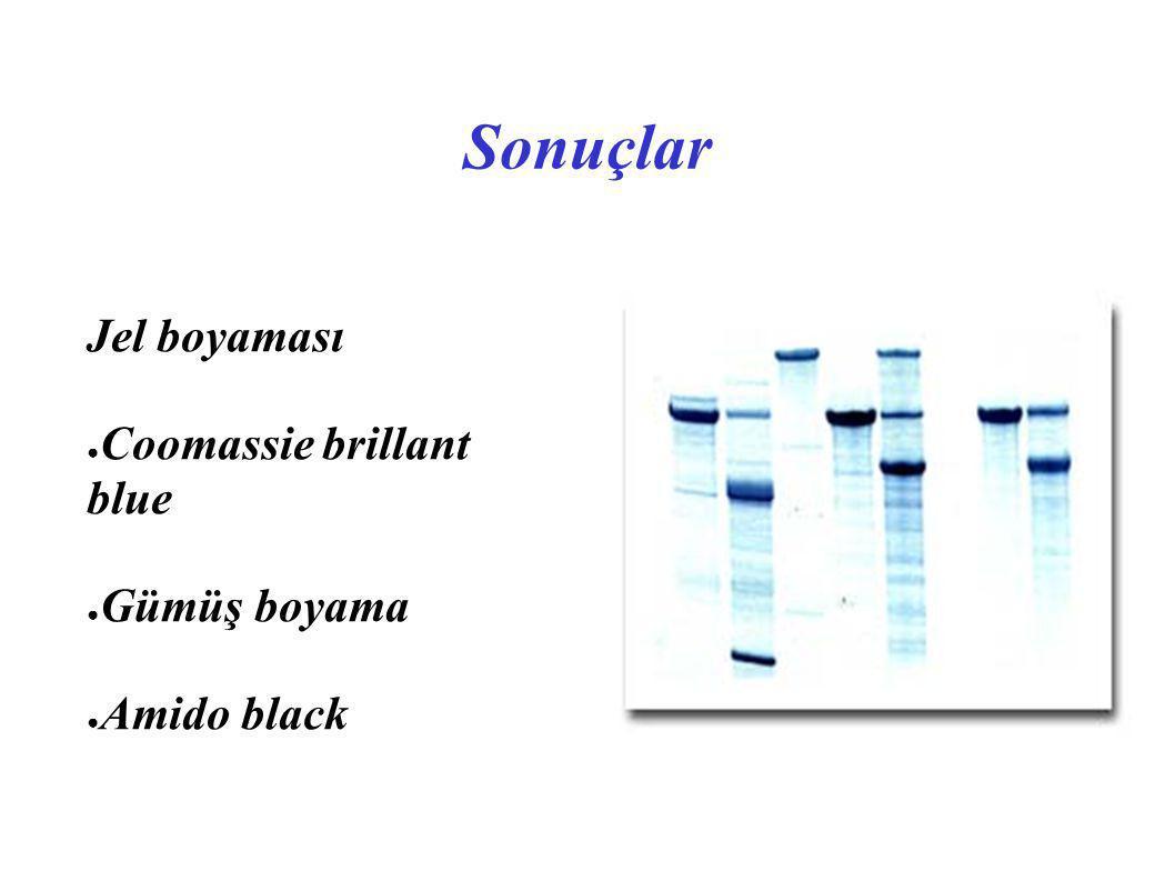 Jel boyaması Coomassie brillant blue Gümüş boyama Amido black