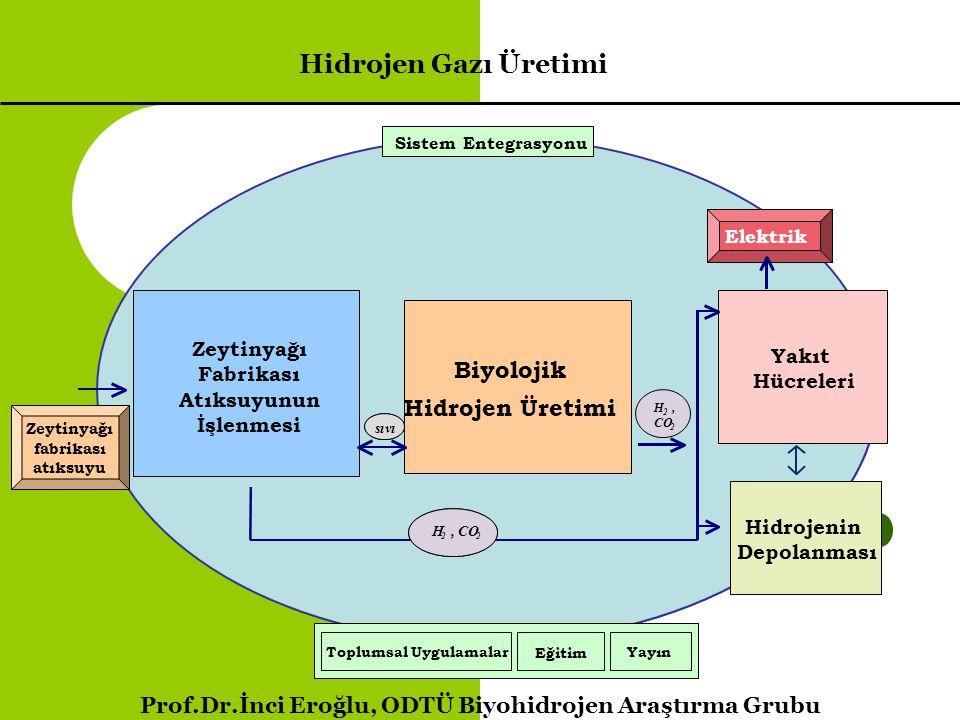 Hidrojen Gazı Üretimi Biyolojik Hidrojen Üretimi