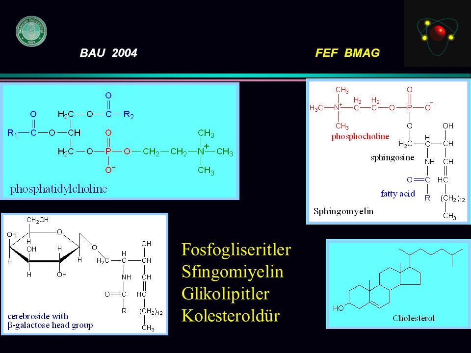 Fosfogliseritler Sfingomiyelin Glikolipitler Kolesteroldür