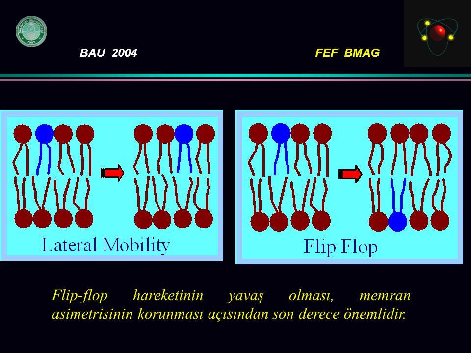 Flip-flop hareketinin yavaş olması, memran asimetrisinin korunması açısından son derece önemlidir.