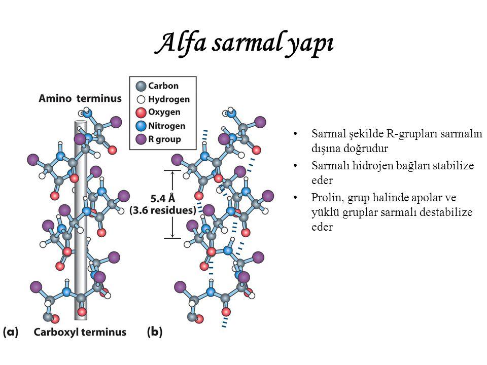 Alfa sarmal yapı Sarmal şekilde R-grupları sarmalın dışına doğrudur