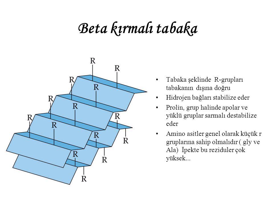Beta kırmalı tabaka Tabaka şeklinde R-grupları tabakanın dışına doğru