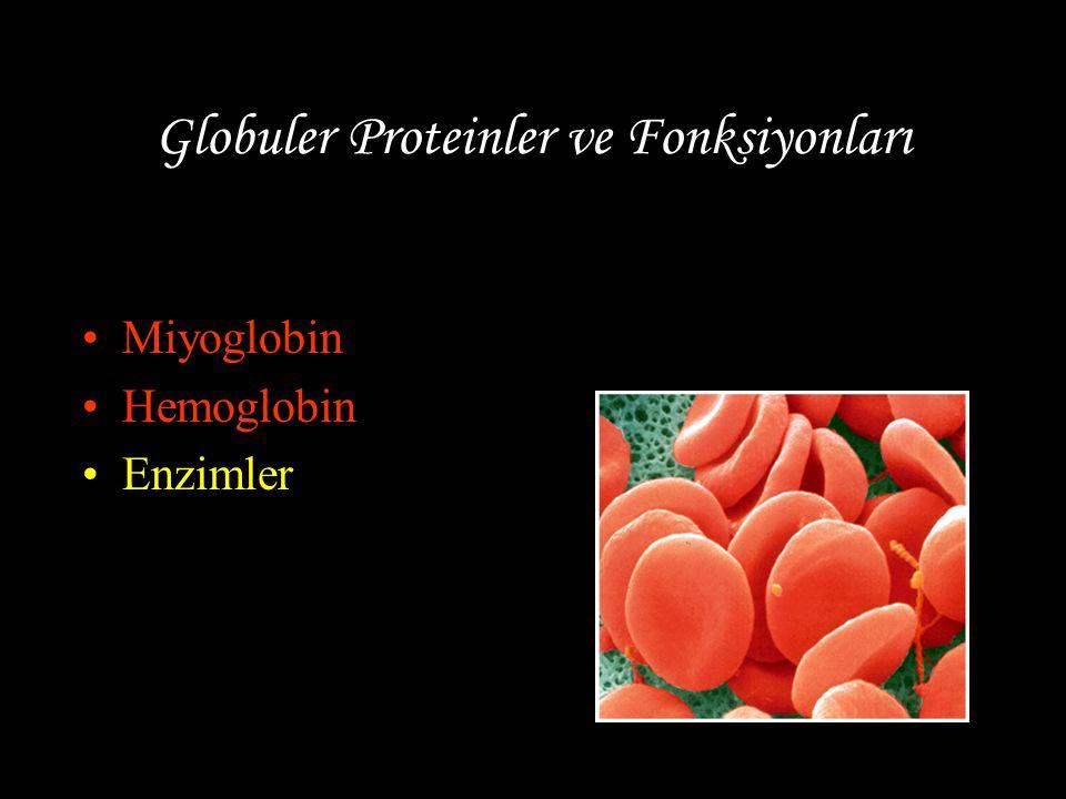 Globuler Proteinler ve Fonksiyonları