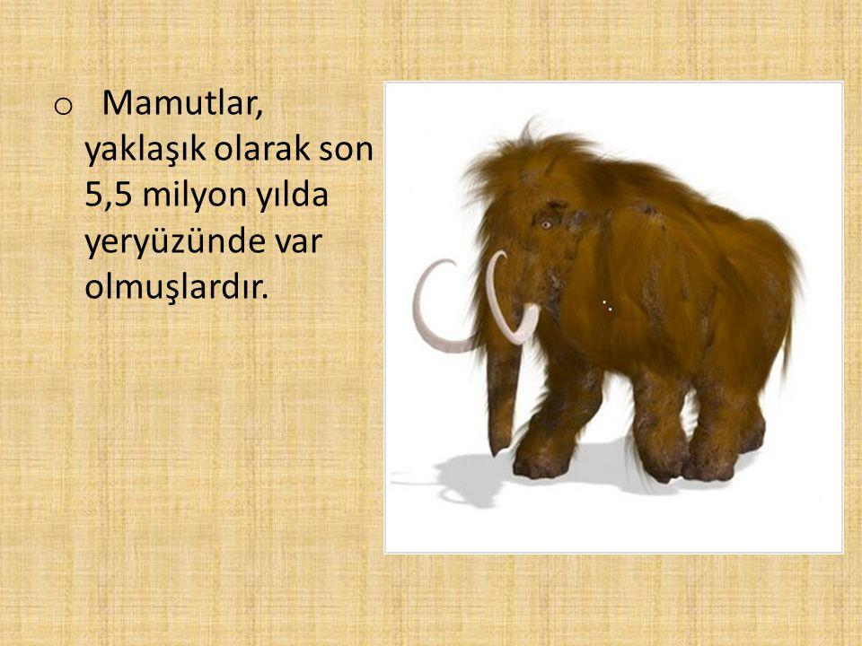 Mamutlar, yaklaşık olarak son 5,5 milyon yılda yeryüzünde var olmuşlardır.