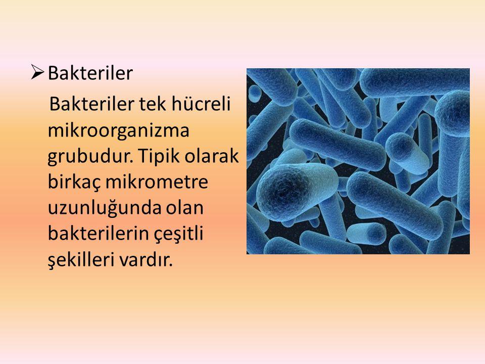 Bakteriler Bakteriler tek hücreli mikroorganizma grubudur.