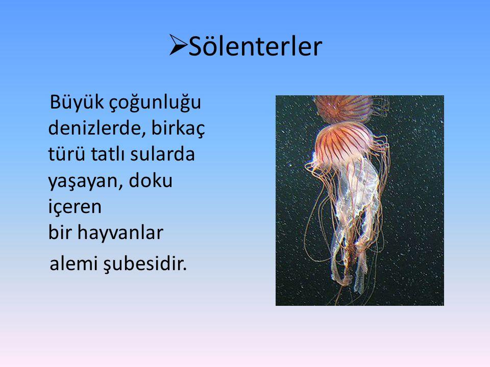Sölenterler Büyük çoğunluğu denizlerde, birkaç türü tatlı sularda yaşayan, doku içeren bir hayvanlar alemi şubesidir.