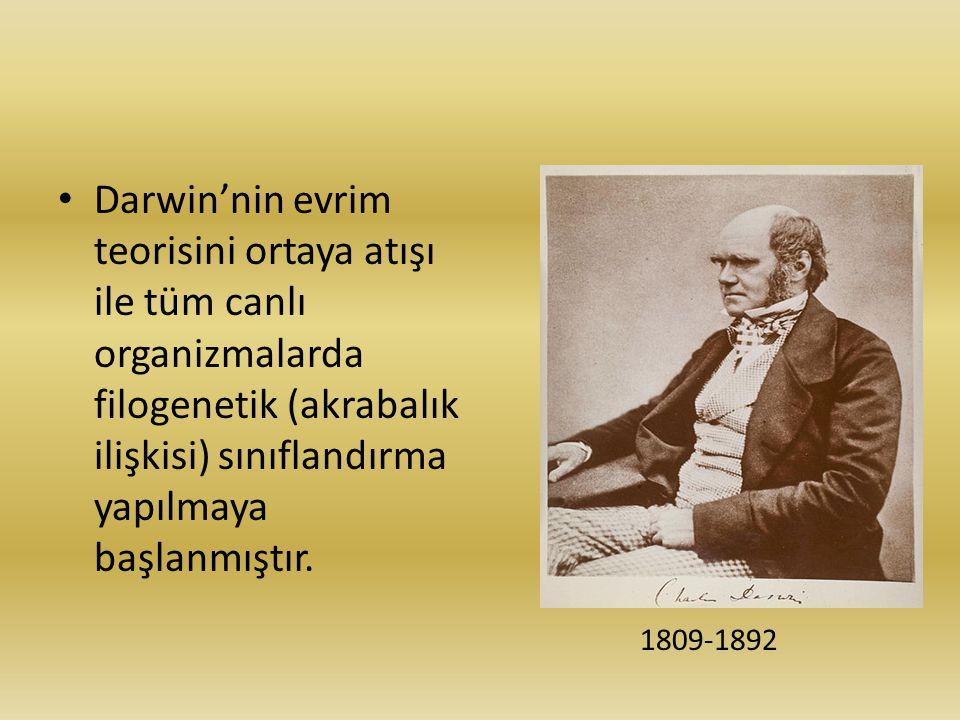 Darwin'nin evrim teorisini ortaya atışı ile tüm canlı organizmalarda filogenetik (akrabalık ilişkisi) sınıflandırma yapılmaya başlanmıştır.