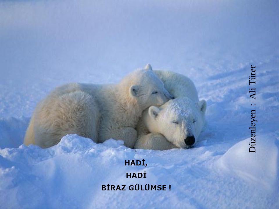 Düzenleyen : Ali Türer HADİ, HADİ BİRAZ GÜLÜMSE !