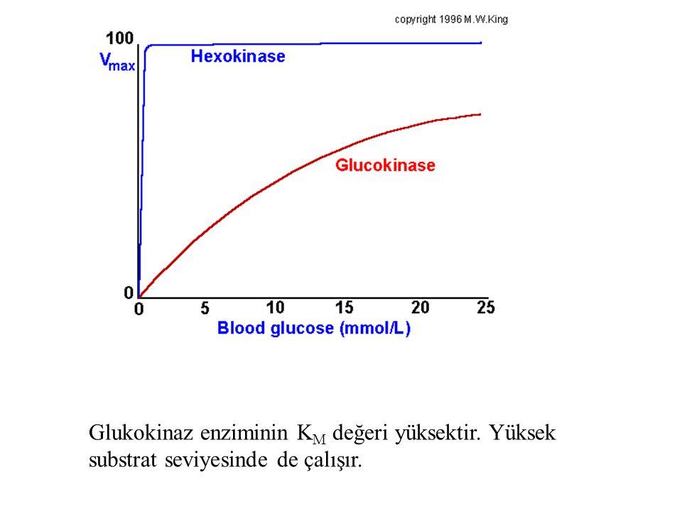 Glukokinaz enziminin KM değeri yüksektir