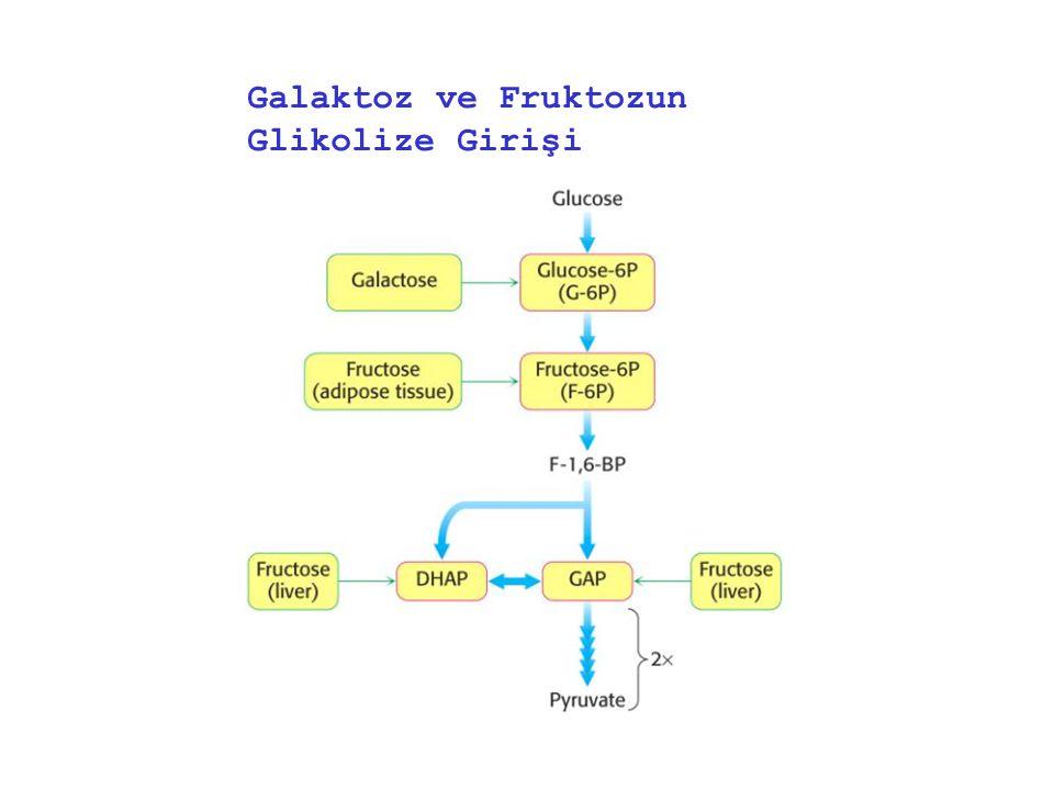 Galaktoz ve Fruktozun Glikolize Girişi