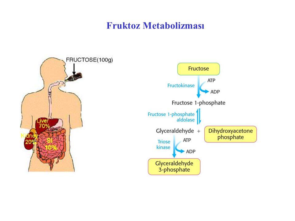 Fruktoz Metabolizması