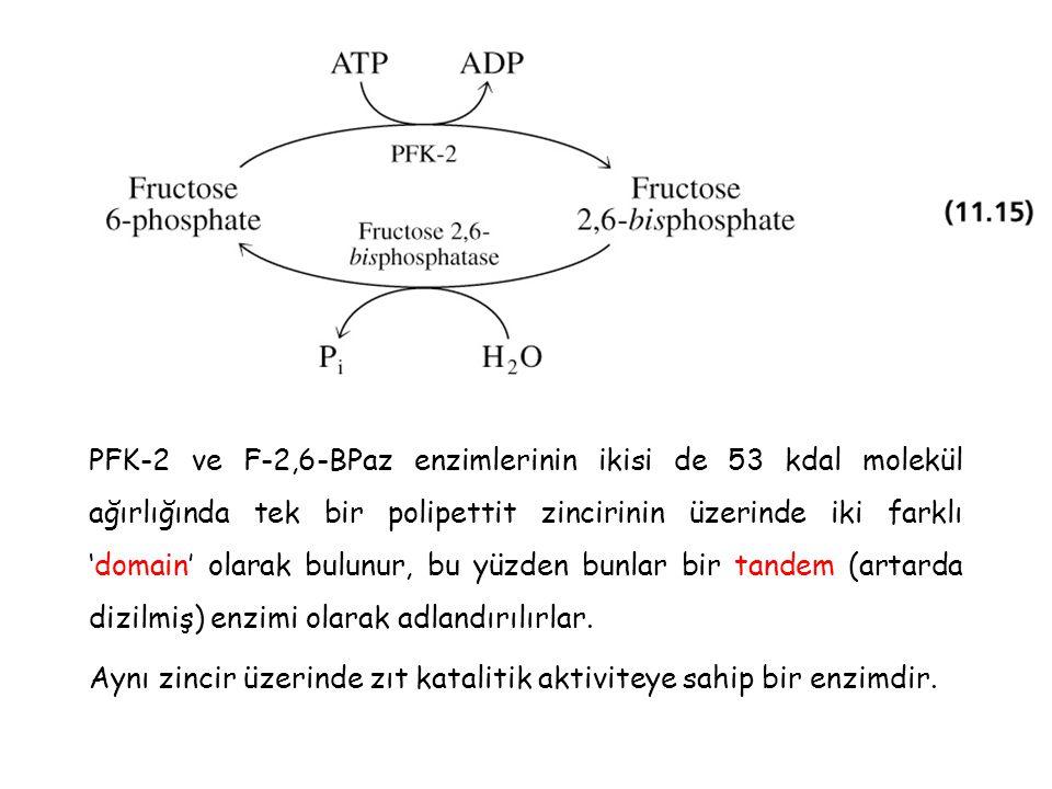 PFK-2 ve F-2,6-BPaz enzimlerinin ikisi de 53 kdal molekül ağırlığında tek bir polipettit zincirinin üzerinde iki farklı 'domain' olarak bulunur, bu yüzden bunlar bir tandem (artarda dizilmiş) enzimi olarak adlandırılırlar.