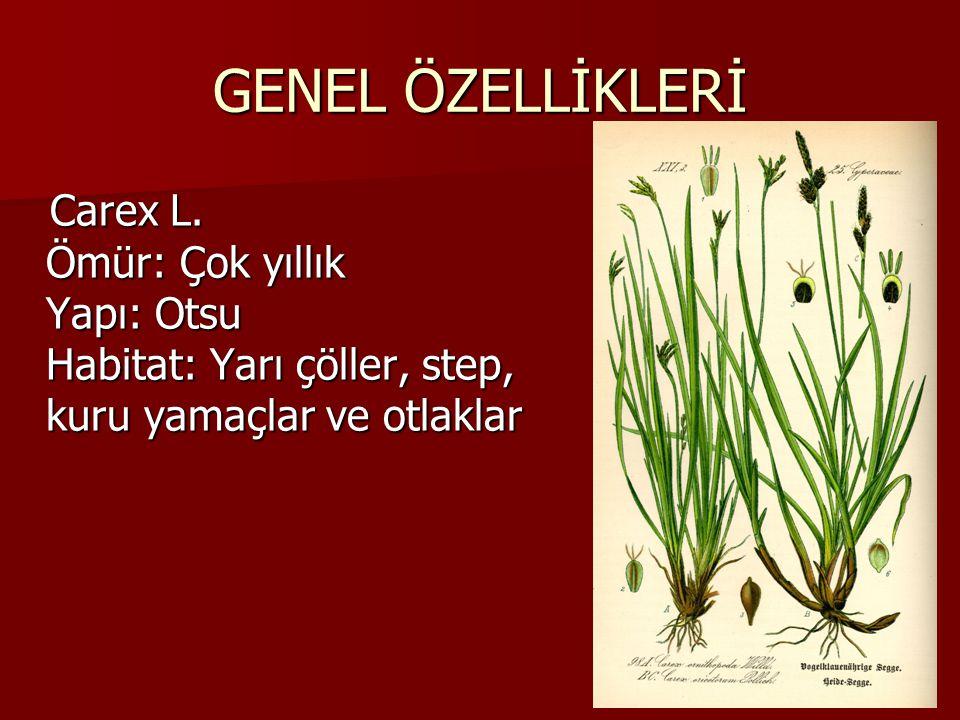 GENEL ÖZELLİKLERİ Carex L.