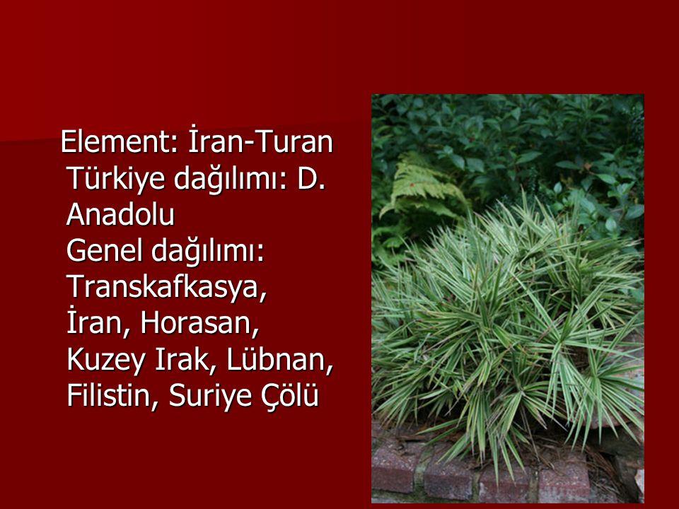 Element: İran-Turan Türkiye dağılımı: D