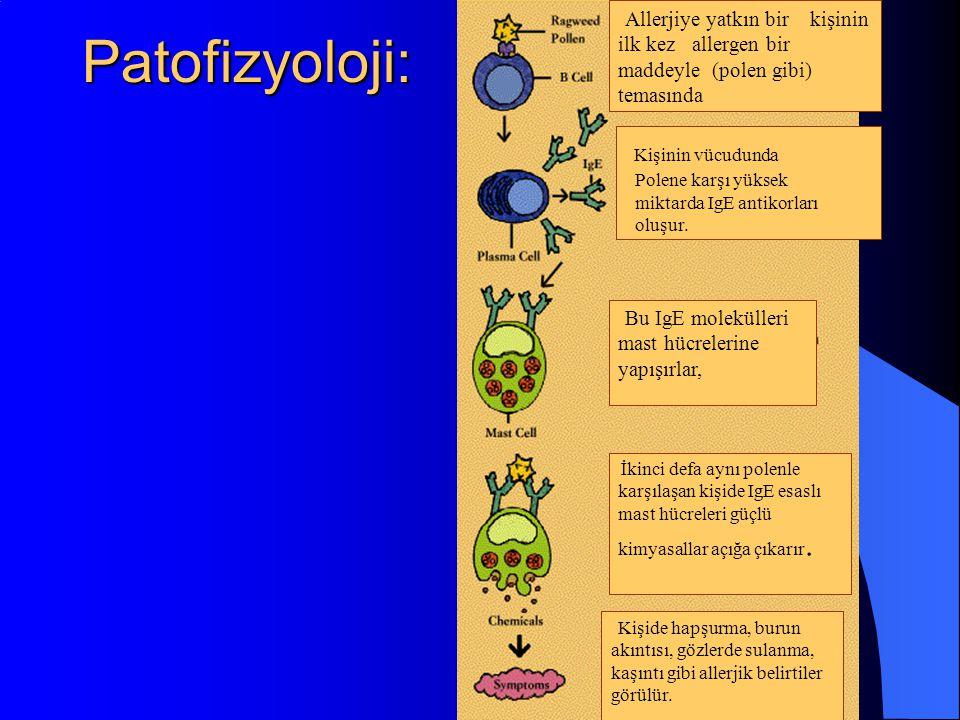 Patofizyoloji: Kişinin vücudunda Polene karşı yüksek