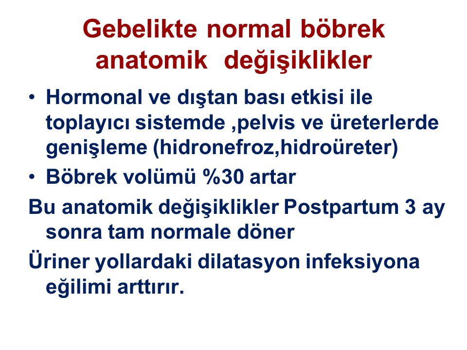 Gebelikte normal böbrek anatomik değişiklikler