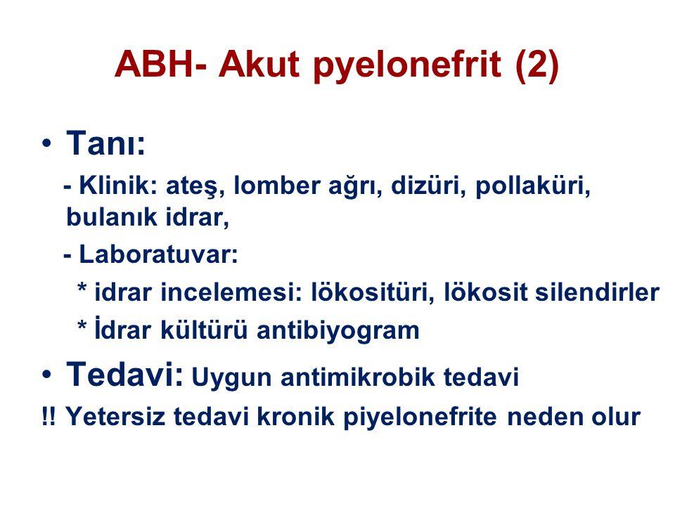 ABH- Akut pyelonefrit (2)