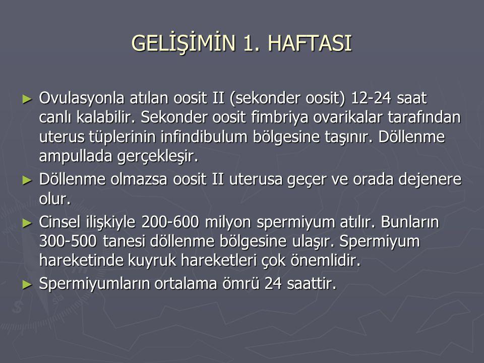 GELİŞİMİN 1. HAFTASI