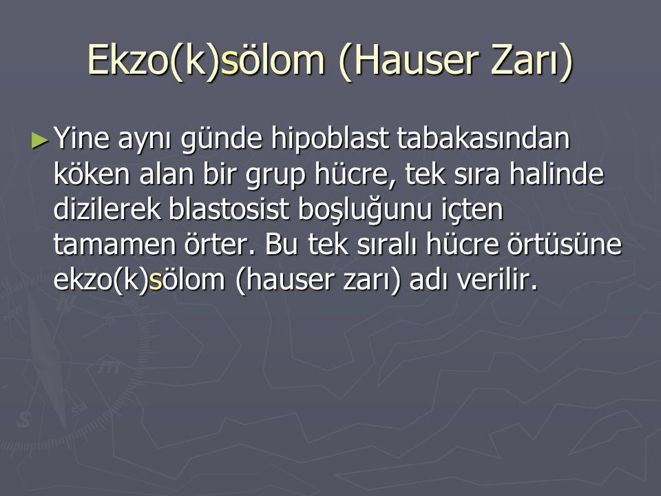 Ekzo(k)sölom (Hauser Zarı)