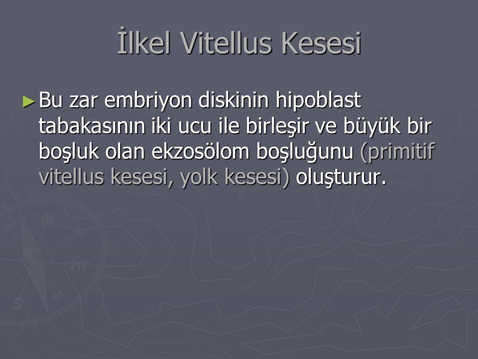 İlkel Vitellus Kesesi