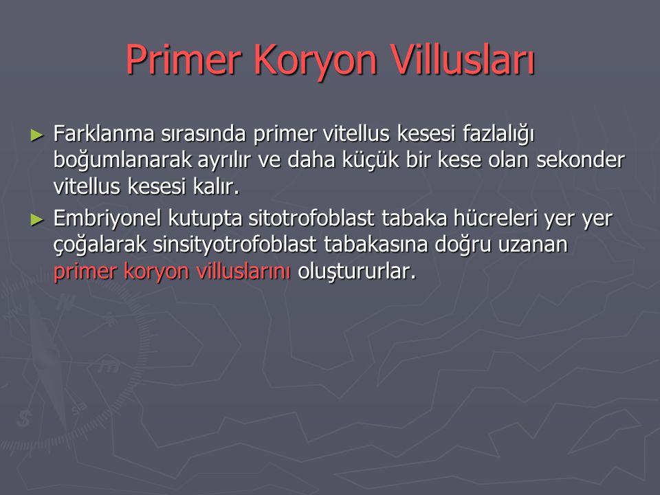 Primer Koryon Villusları