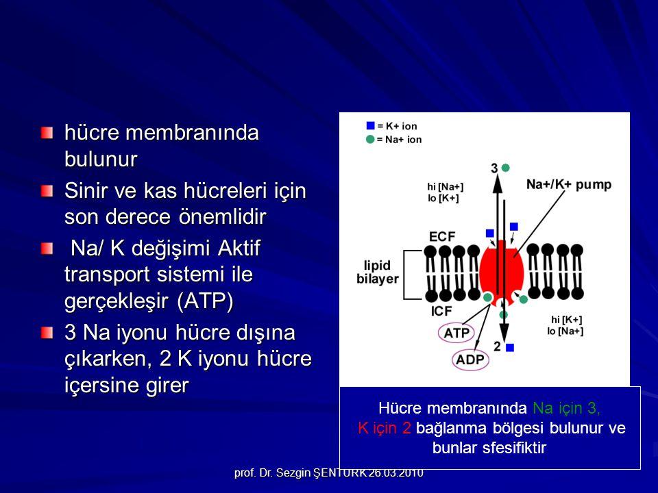 hücre membranında bulunur