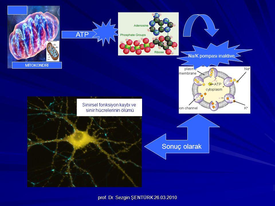 ATP Sonuç olarak Na/K pompası inaktive Sinirsel fonksiyon kaybı ve
