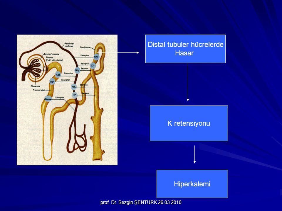 Distal tubuler hücrelerde