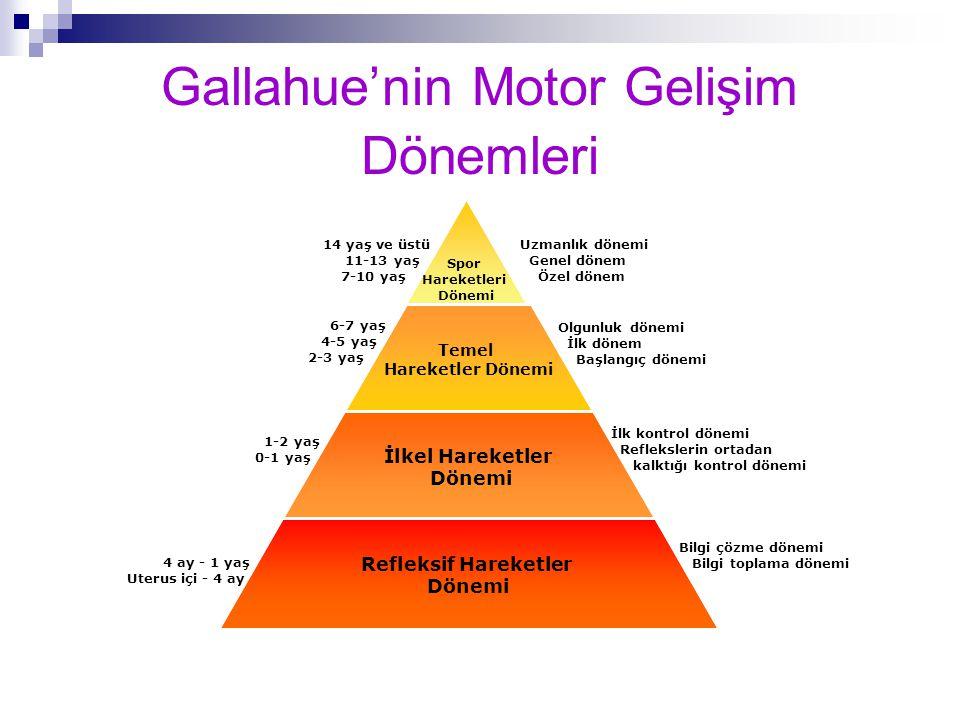 Gallahue'nin Motor Gelişim Dönemleri