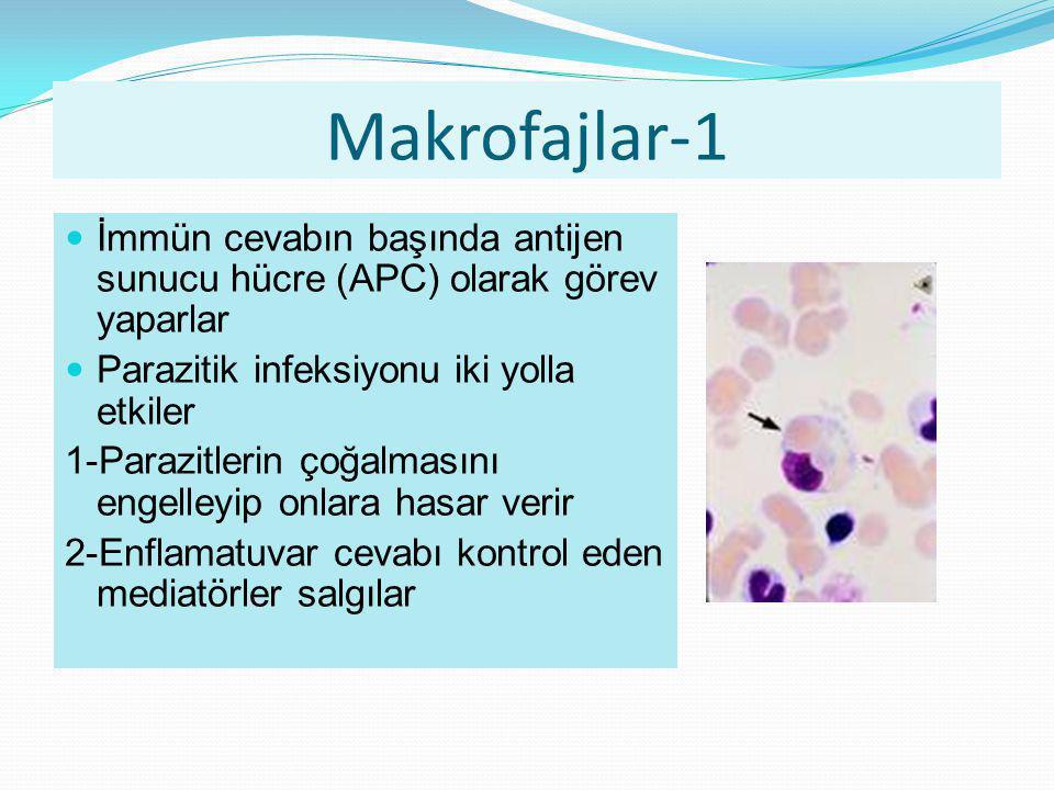 Makrofajlar-1 İmmün cevabın başında antijen sunucu hücre (APC) olarak görev yaparlar. Parazitik infeksiyonu iki yolla etkiler.