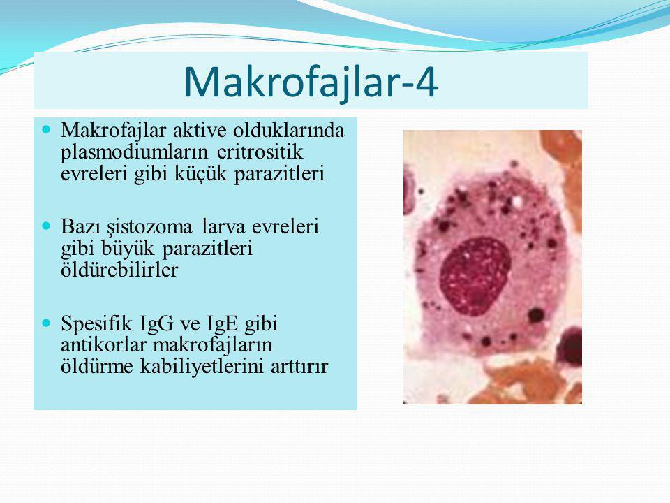 Makrofajlar-4 Makrofajlar aktive olduklarında plasmodiumların eritrositik evreleri gibi küçük parazitleri.