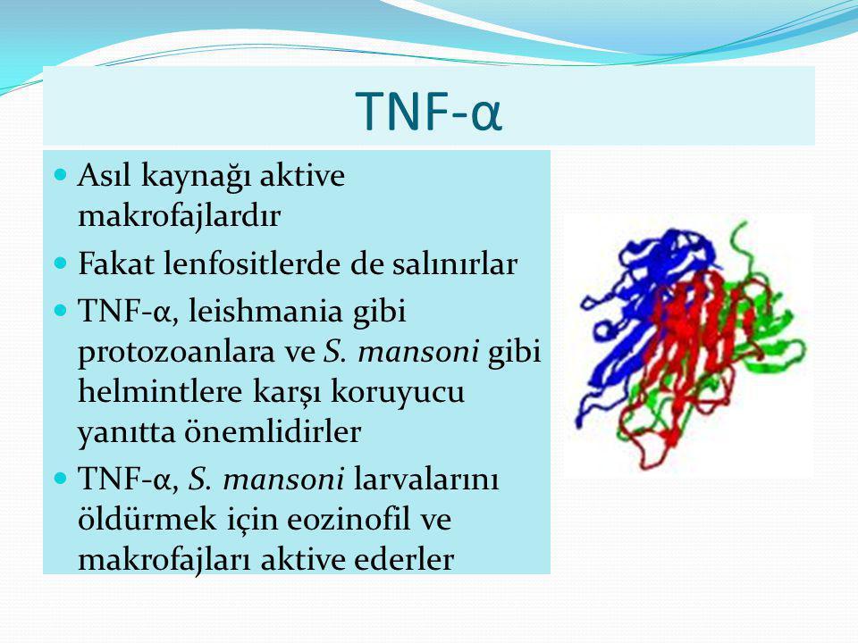 TNF-α Asıl kaynağı aktive makrofajlardır