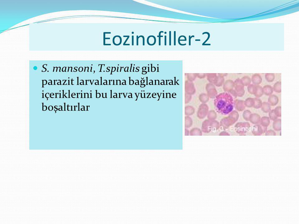 Eozinofiller-2 S.