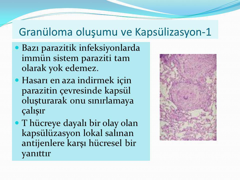 Granüloma oluşumu ve Kapsülizasyon-1