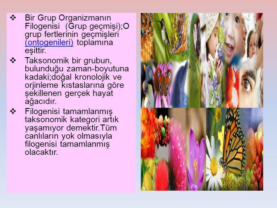 Bir Grup Organizmanın Filogenisi (Grup geçmişi);O grup fertlerinin geçmişleri (ontogenileri) toplamına eşittir.