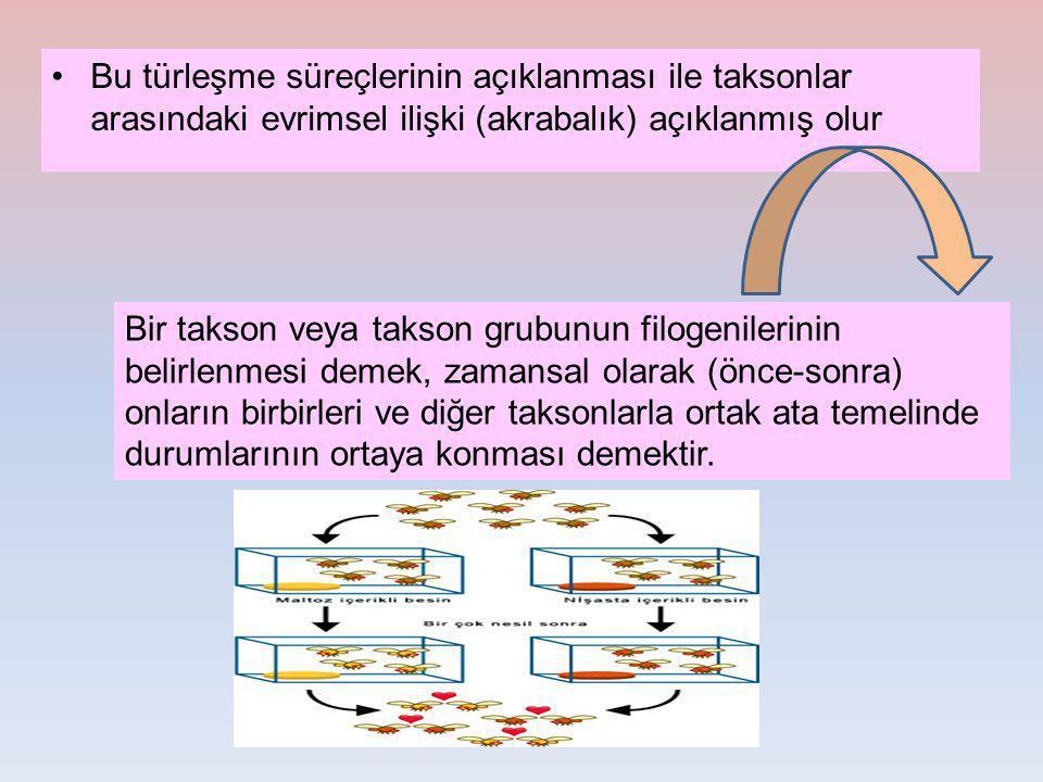 Bu türleşme süreçlerinin açıklanması ile taksonlar arasındaki evrimsel ilişki (akrabalık) açıklanmış olur