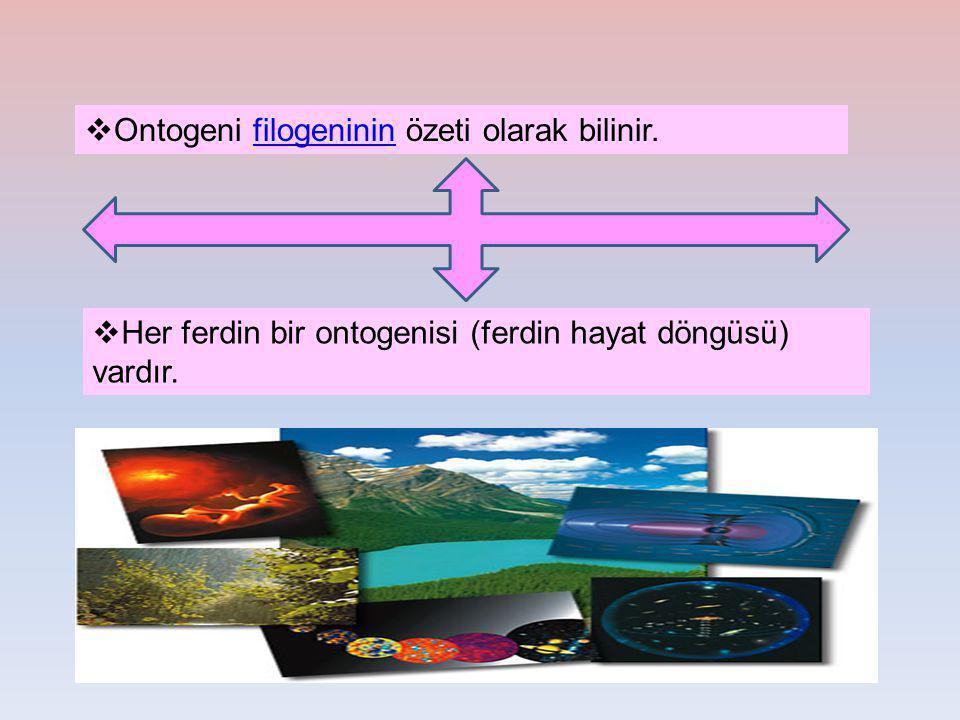 Ontogeni filogeninin özeti olarak bilinir.