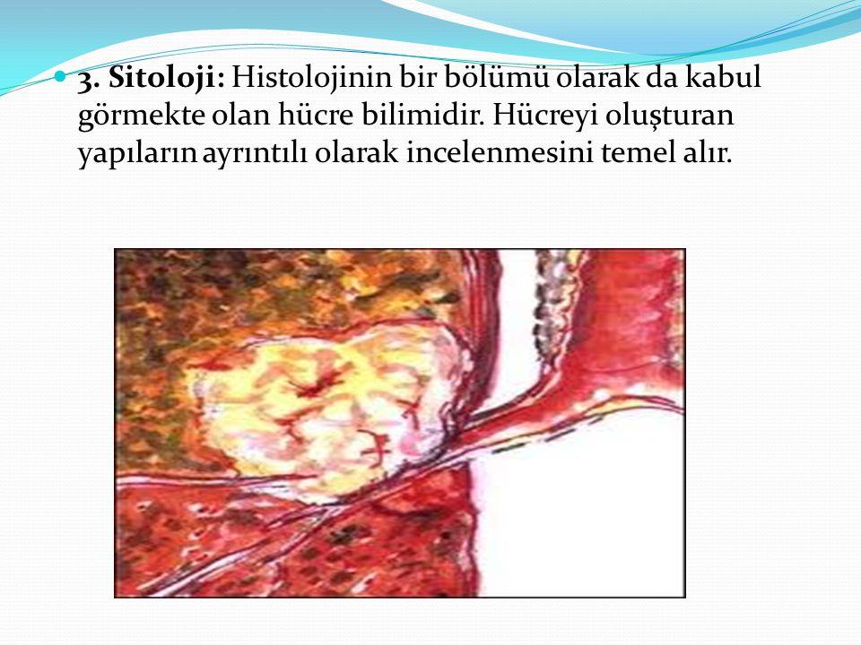 3. Sitoloji: Histolojinin bir bölümü olarak da kabul görmekte olan hücre bilimidir.