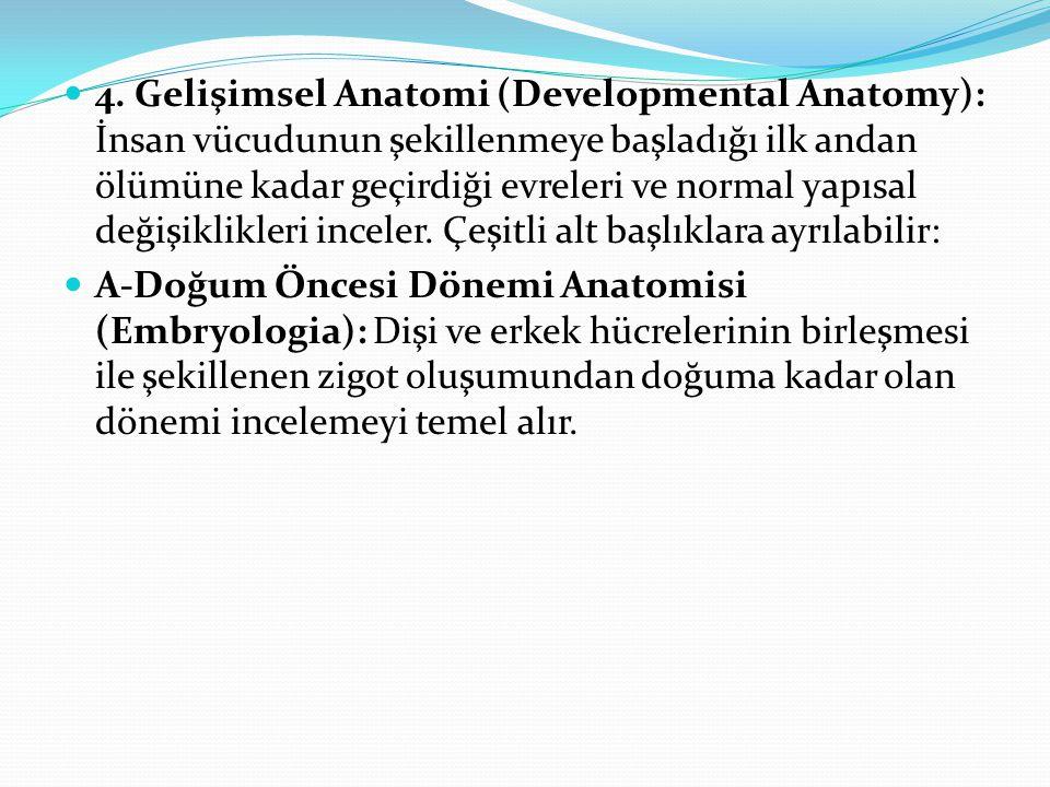 4. Gelişimsel Anatomi (Developmental Anatomy): İnsan vücudunun şekillenmeye başladığı ilk andan ölümüne kadar geçirdiği evreleri ve normal yapısal değişiklikleri inceler. Çeşitli alt başlıklara ayrılabilir: