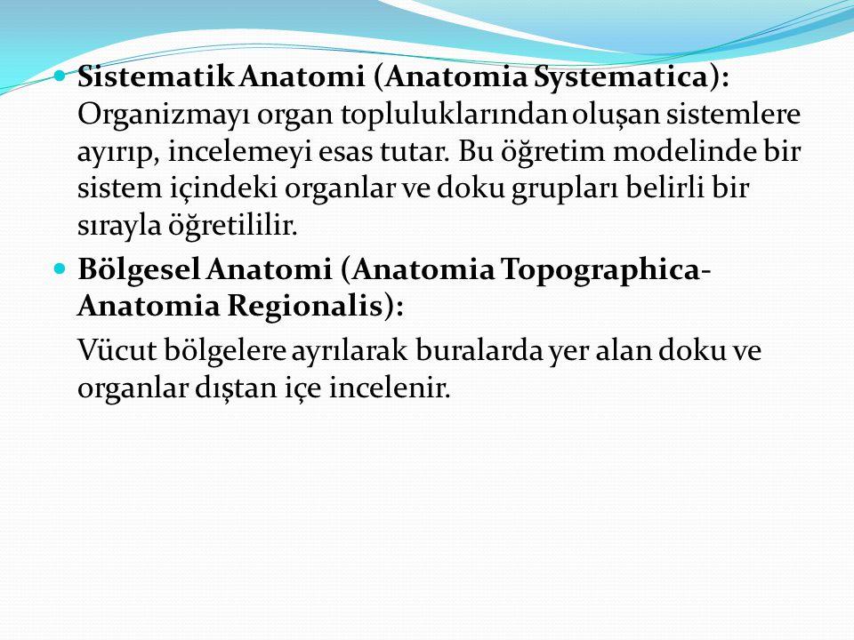 Sistematik Anatomi (Anatomia Systematica): Organizmayı organ topluluklarından oluşan sistemlere ayırıp, incelemeyi esas tutar. Bu öğretim modelinde bir sistem içindeki organlar ve doku grupları belirli bir sırayla öğretililir.