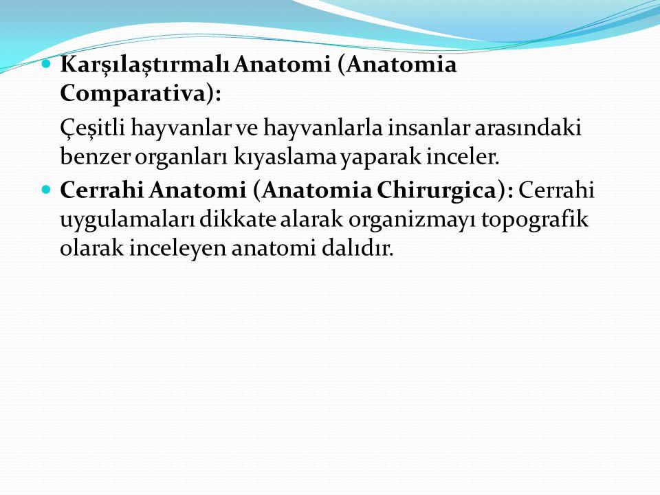 Karşılaştırmalı Anatomi (Anatomia Comparativa):