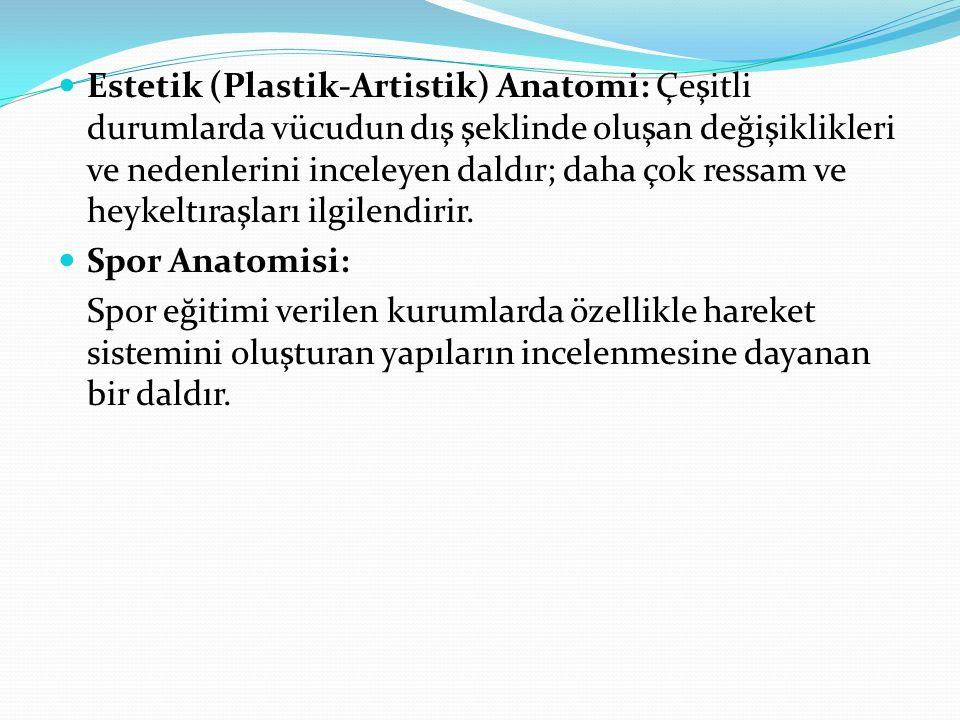 Estetik (Plastik-Artistik) Anatomi: Çeşitli durumlarda vücudun dış şeklinde oluşan değişiklikleri ve nedenlerini inceleyen daldır; daha çok ressam ve heykeltıraşları ilgilendirir.