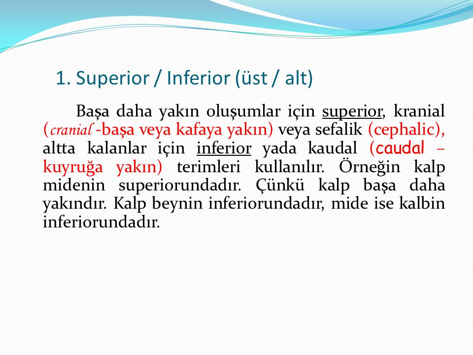 1. Superior / Inferior (üst / alt)