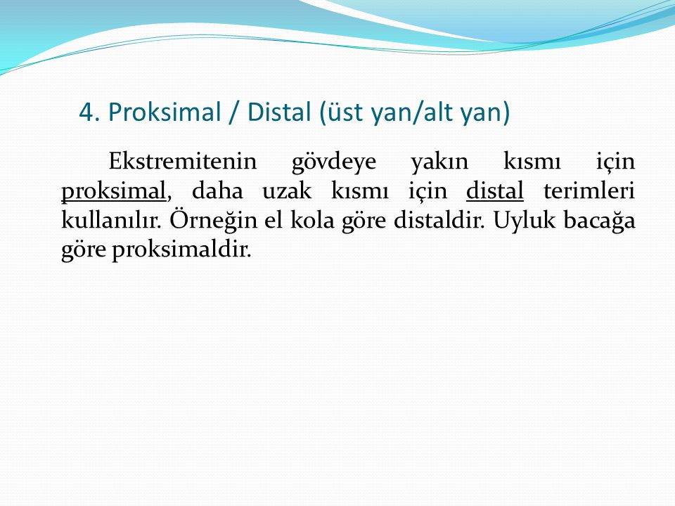 4. Proksimal / Distal (üst yan/alt yan)
