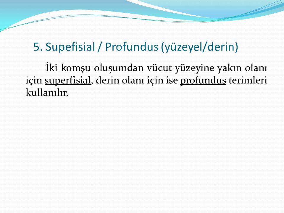 5. Supefisial / Profundus (yüzeyel/derin)