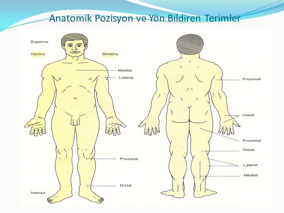 Anatomik Pozisyon ve Yön Bildiren Terimler